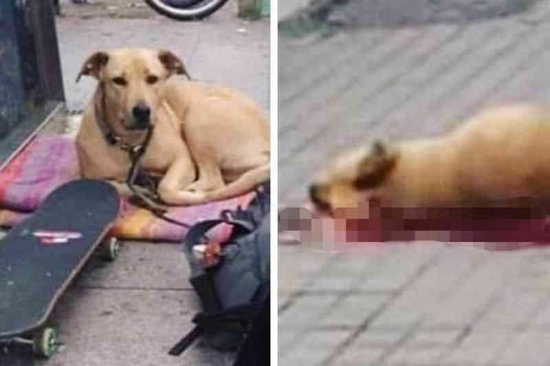 Ator se revolta com cachorro de sem teto morto pela polícia e causa comoção nas redes sociais