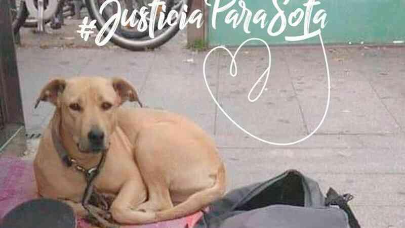 A polícia matou uma cadela em Barcelona. Os protestos não tardaram