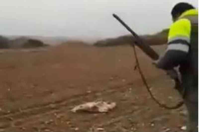 Vídeo mostra caçador a torturar até à morte raposa indefesa em Espanha