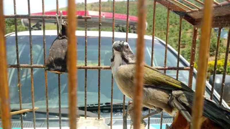 Pássaros silvestres são apreendidos em Bom Jesus do Norte, ES