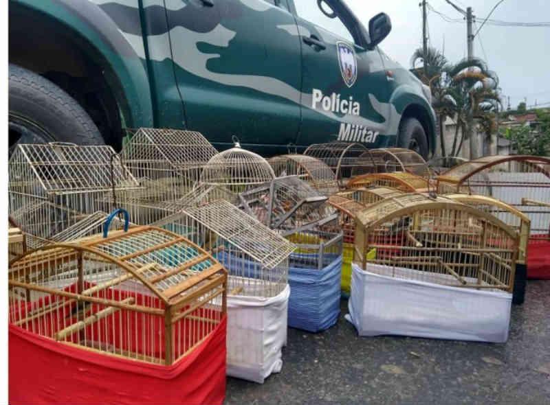 Polícia Ambiental apreende animais silvestres mantidos em cativeiro no Santa Cruz em Linhares, ES