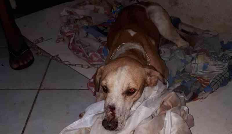 Cachorro é baleado na boca por morador de São José do Calçado, ES