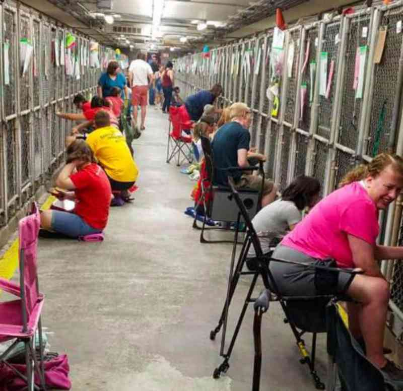 Mais de 100 pessoas aparecem no abrigo para consolar os cães durante os fogos de artifício