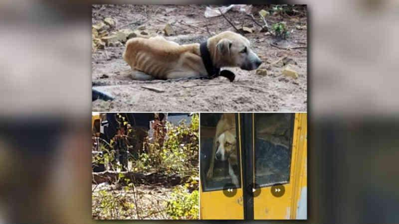 Homem é preso nos EUA depois que fotos de cães famintos viralizam nas redes sociais