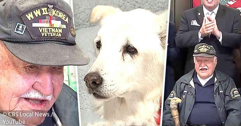 Veterano de guerra de 93 anos salvou cachorro de 13 anos de ser executado. Como ajudar essas pobres criaturas?