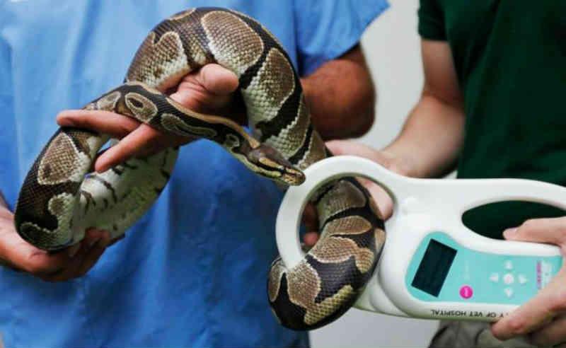 Casal preso nos EUA por maus-tratos contra pelo menos 240 animais exóticos