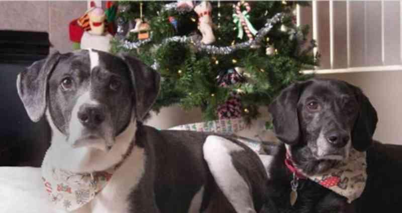 Homem manda matar cachorros após divórcio, mas animais são resgatados por ONG