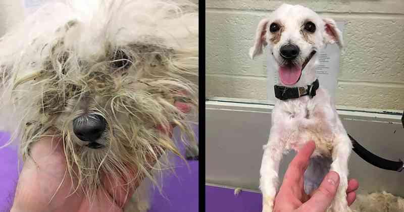 Esse homem tosa cachorros de abrigos de animais para ajudá-los a serem adotados