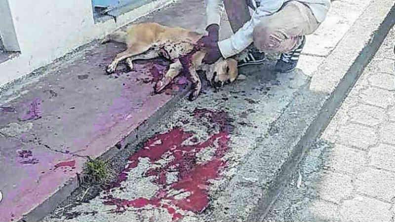 Equador: apunhalaram um cachorro até matá-lo! E ele apenas estava com fome…