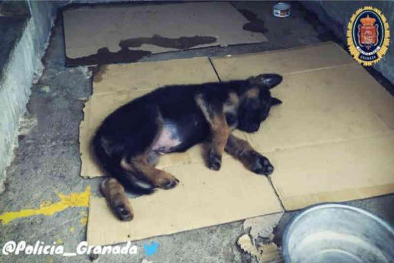 Espanha: lindo gesto da polícia de Granada para com um cachorrinho maltratado