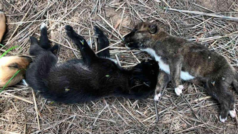 Jovem encontra cerca de 20 cachorrinhos mortos em um campo na Espanha