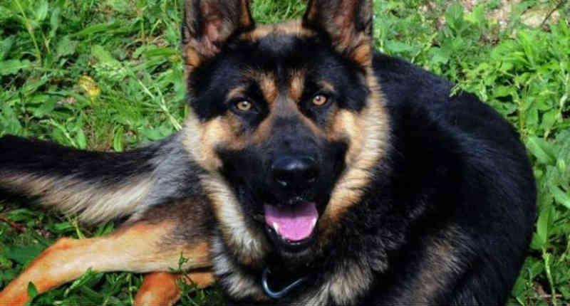 Julgado por maus-tratos contra seu próprio cachorro: 'Eu o enforquei e sepultei no jardim'