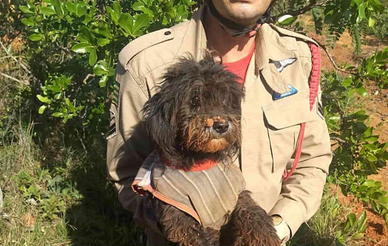 Cachorro é resgatado após cair em buraco com mais de oito metros em Cristalina, GO