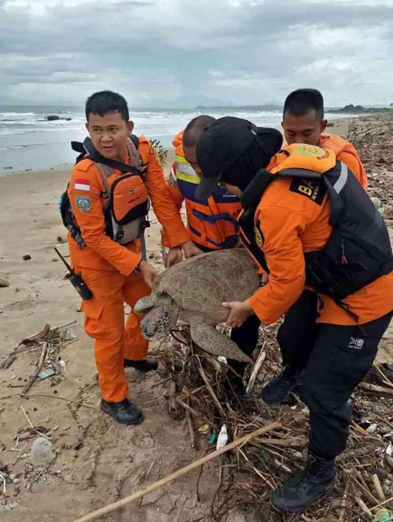 Equipes de emergência da Indonésia resgatam tartarugas após tsunami