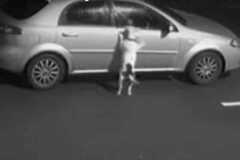 Cachorro é abandonado e tenta voltar para o carro dos tutores; vídeo