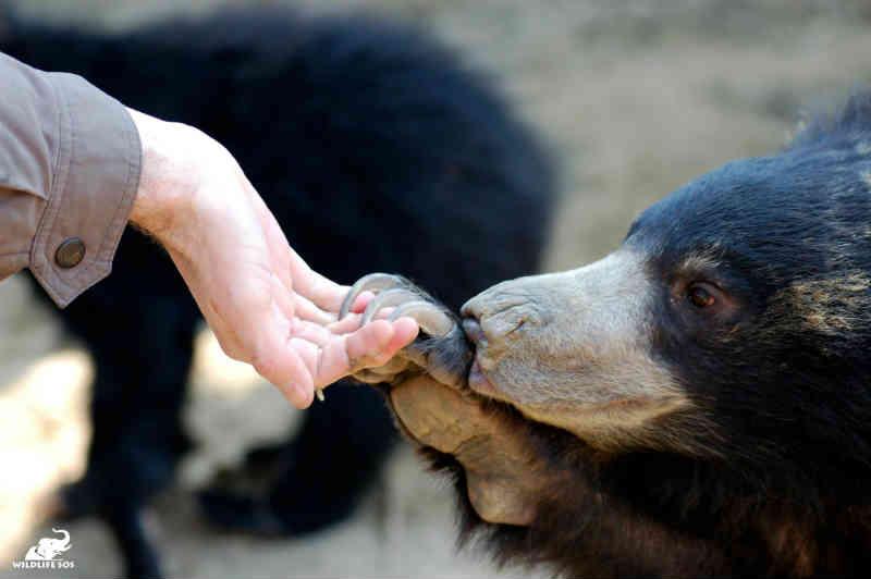 Wildlife SOS: 'Como ajudamos as comunidades locais e as capacitamos para acabar com a crueldade animal na Índia'