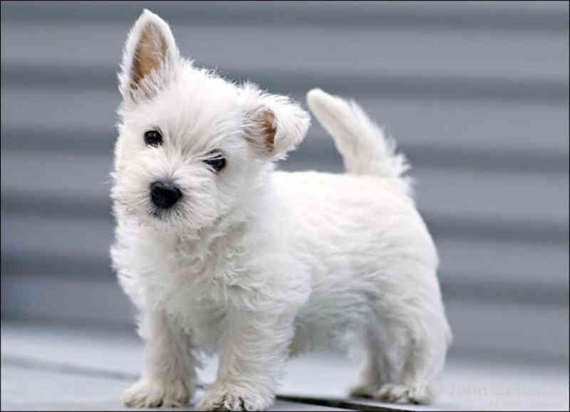 Reino Unido proíbe venda de cães e gatos em lojas de animais