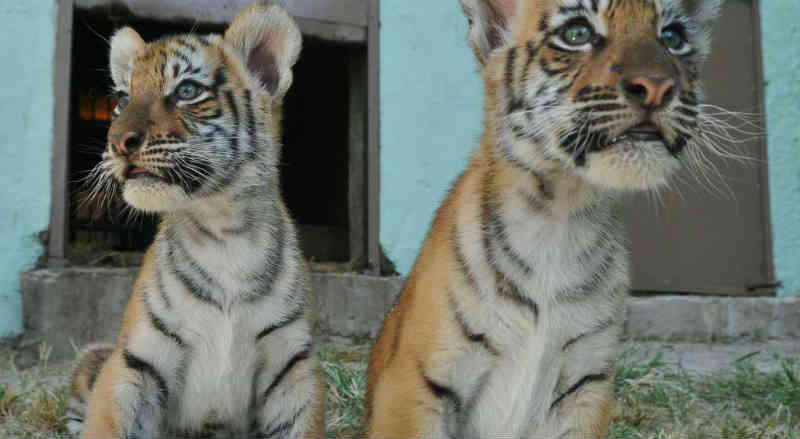 Livraram o diretor do Zoo de Córdoba da acusação de 14 casos de crueldade animal