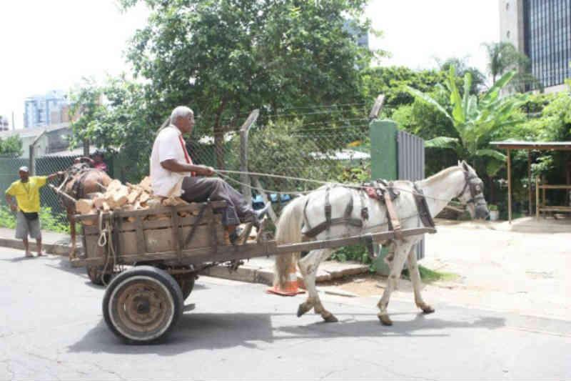 Acordo regulariza situação de veículos de tração animal em Belo Horizonte, MG