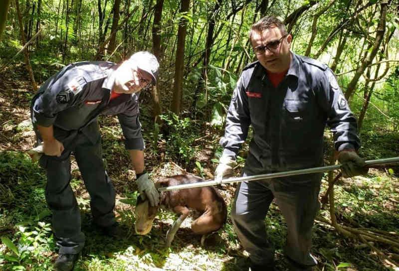 Bombeiros resgatam pit bull em fossa séptica em Barbacena, MG
