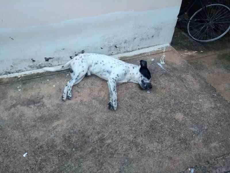 Policia Militar é acionada após cachorros serem envenenados em residência em Carmo do Paranaíba, MG