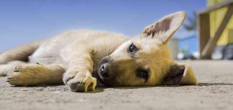 AGU ajuíza ação para obrigar Barbacena (MG) a recolher animais abandonados em campus