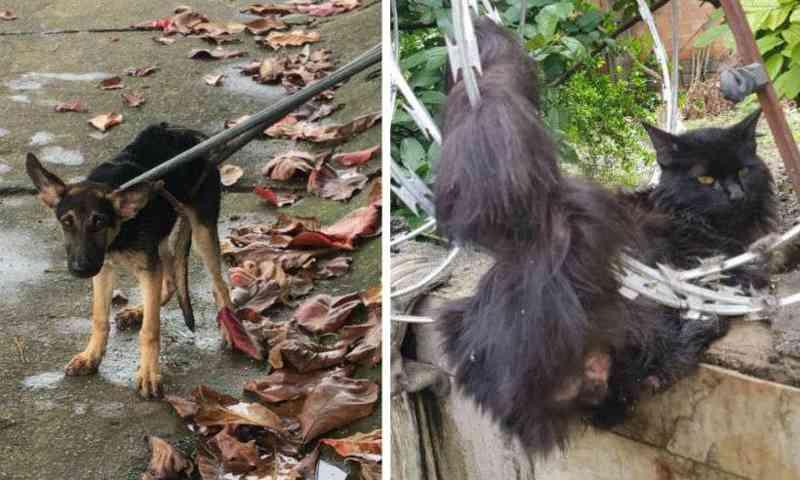 Bombeiros resgatam cachorro em córrego e gato preso em cerca em BH; vídeo