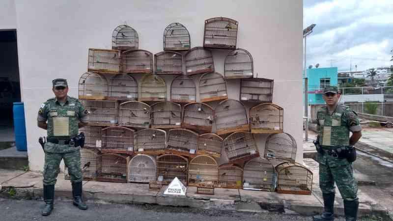 Idoso é preso por crime ambiental e 35 pássaros são apreendidos em Campo Belo, MG