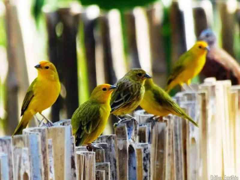 Fortuna de Minas (MG): a cidade dos pássaros livres