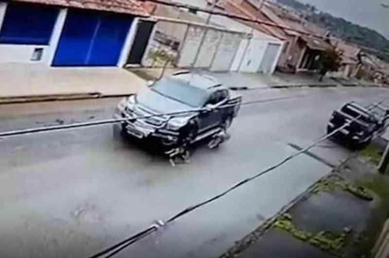 Motorista atropela cadela propositalmente e foge sem prestar socorro, em Pouso Alegre, MG