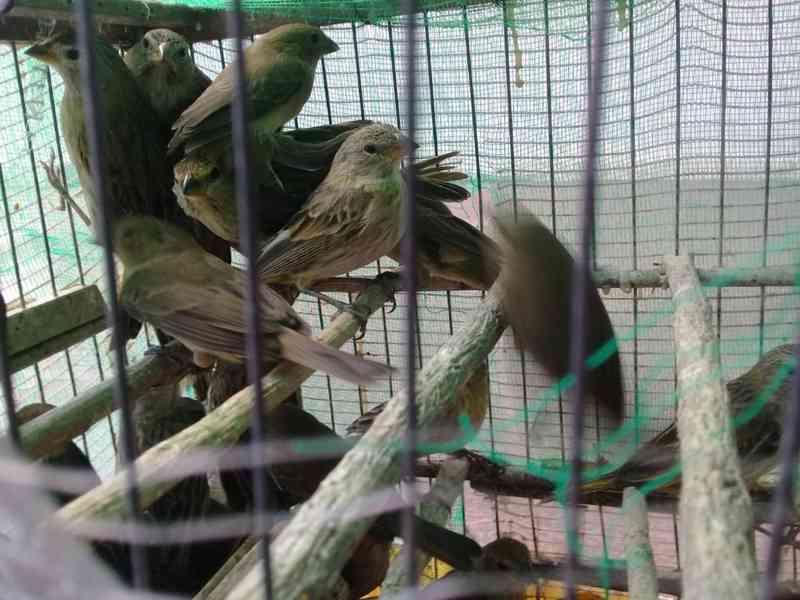 Homem é autuado em mais de R$ 200 mil por transportar aves silvestres em Serra do Salitre, MG