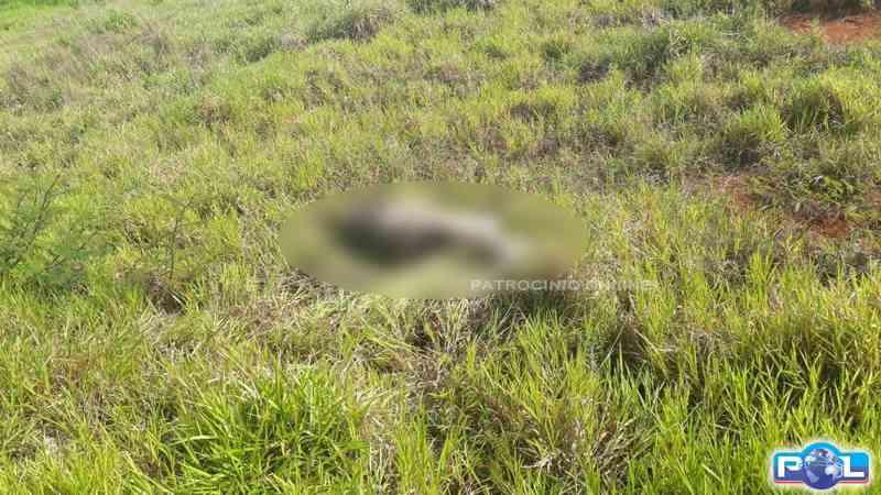 Cavalos soltos próximo a Serra do Salitre (MG) causam acidentes e morte de animais