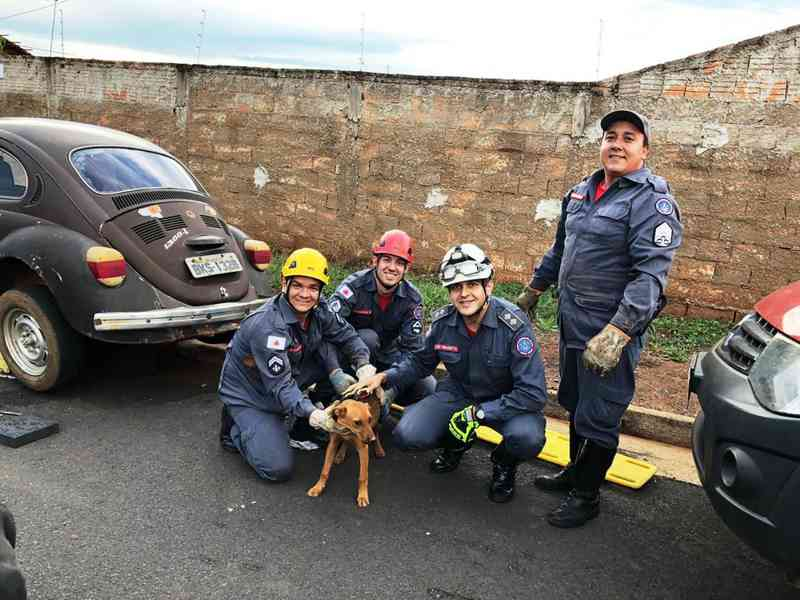Cachorra é resgatada ao ficar presa sob carro e ganha 'ceia' de Natal em Uberaba, MG
