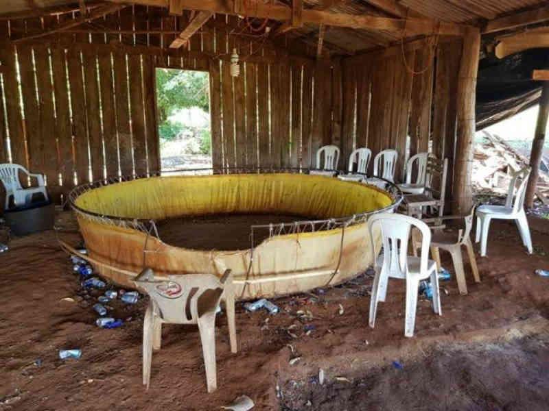 PMA apreende galos de briga e dono de rinha é autuado por crime ambiental em Dourados, MS