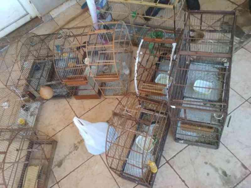 Homem é multado por manter seis curiós e canário-da-terra em cativeiro, em Dourados, MS