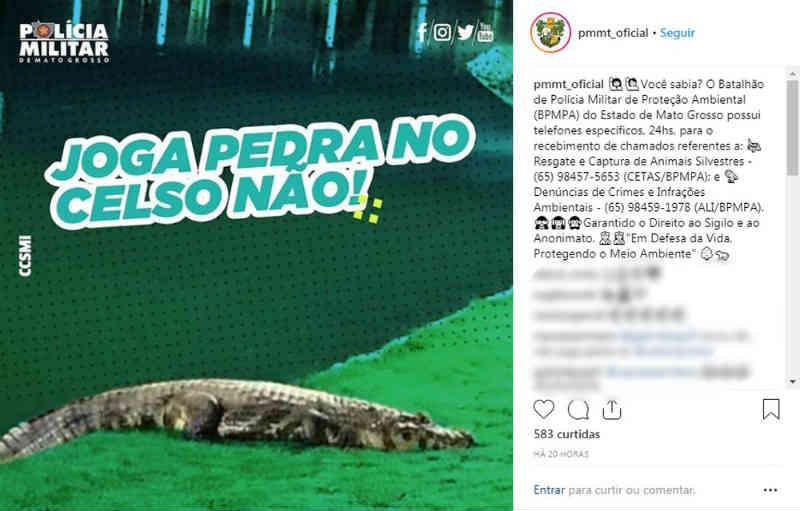 PM pede em rede social que moradores não atirem pedras em jacaré que ganhou fama ao andar na faixa de pedestre em Cuiabá, MT