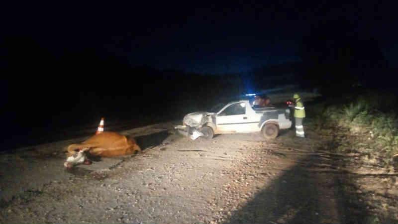 Boi morre atropelado por picape ao atravessar BR-070 junto com outros animais durante a madrugada em MT
