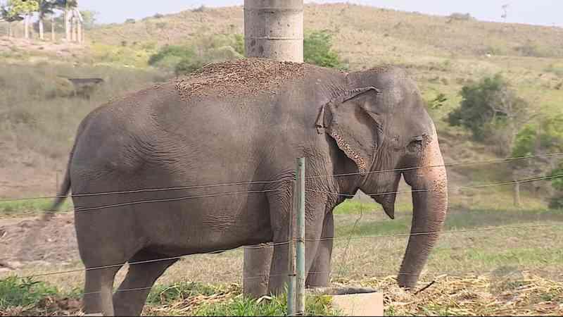 Elefanta Rana chegou ao Santuário de Elefantes Brasil (SEB), em Chapada dos Guimarães — Foto: TV Centro América/Divulgação