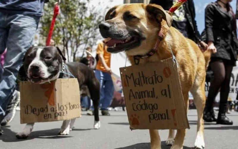 México: cinco anos de prisão para quem maltratar um animal