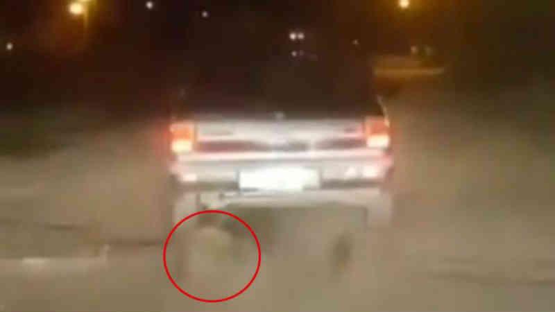 Horror em Monte Cristo: amarrou um cachorro ao carro e o arrastou