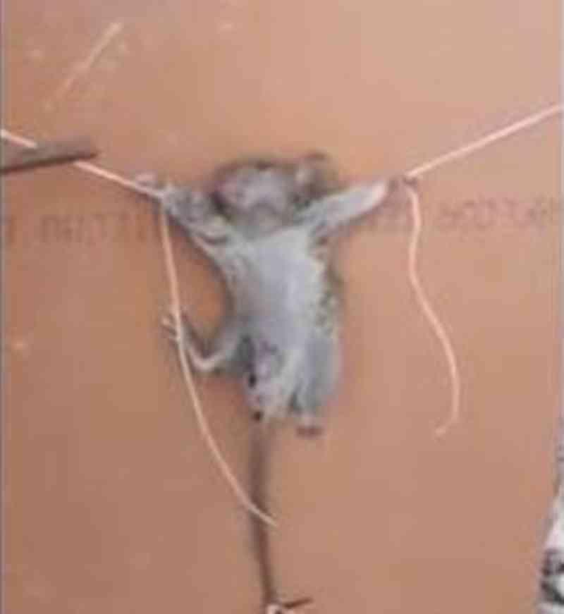 Vídeo com tortura de rato causa revolta na internet