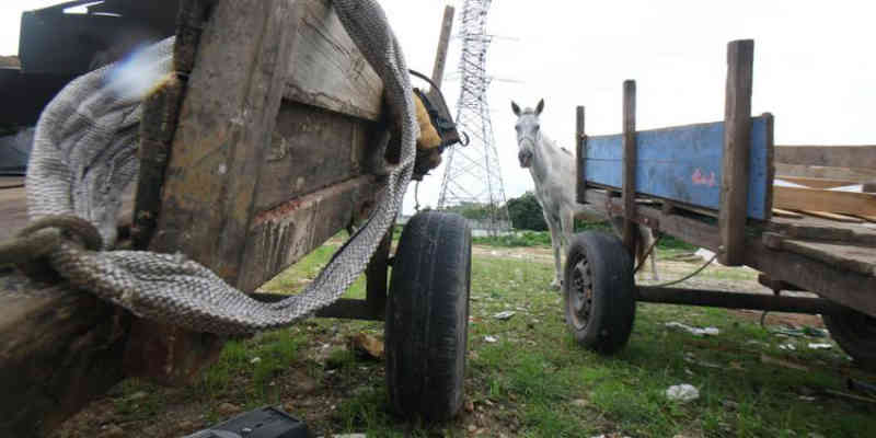 Projeto proíbe uso de tração animal em Belém (PA), mas não define responsabilidades
