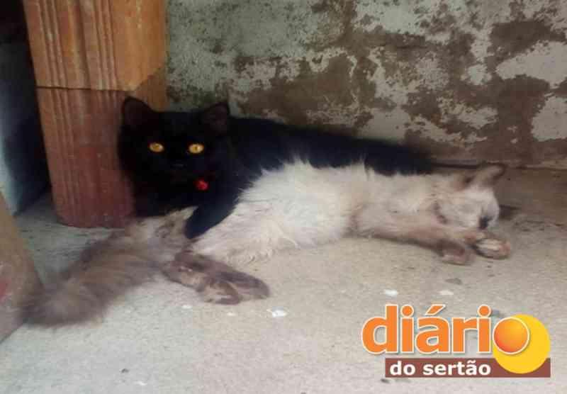 Emocionante! Gato morre e irmão fica abraçado com o corpo até ele ser tirado para ser enterrado