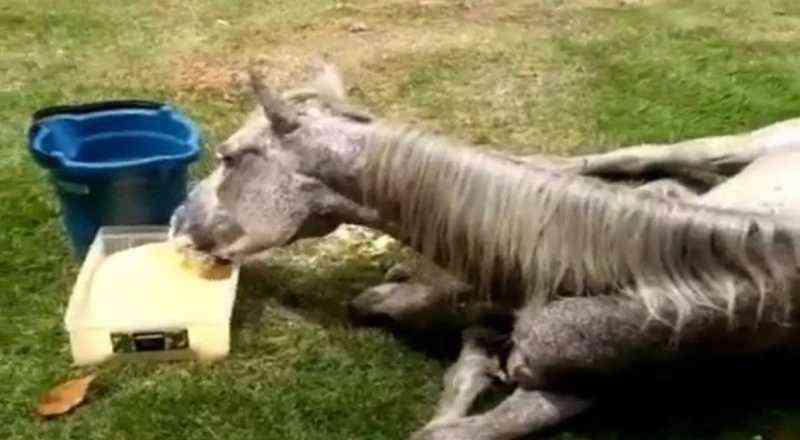 Cavalo é abandonado em praça na capital com sinais de maus-tratos em João Pessoa, PB