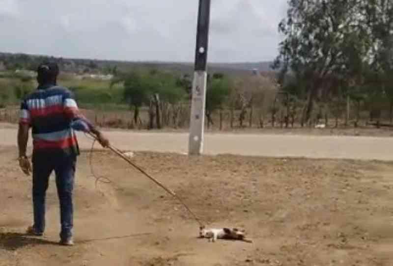 Gato é maltratado por homem até a morte na Paraíba; veja o vídeo