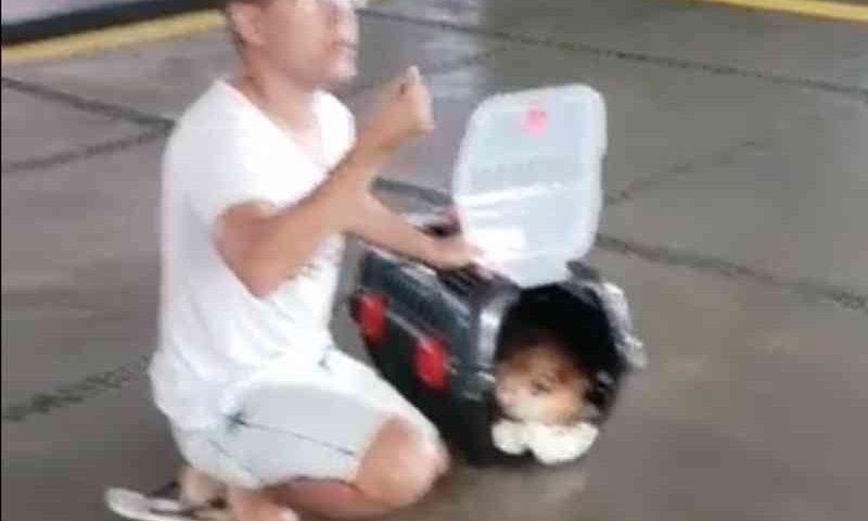 Cachorro morre ao ser transportado em bagageiro de ônibus, na PB