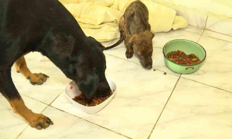 Duas clínicas particulares atenderão animais encaminhados da GPA, em Caruaru, PE