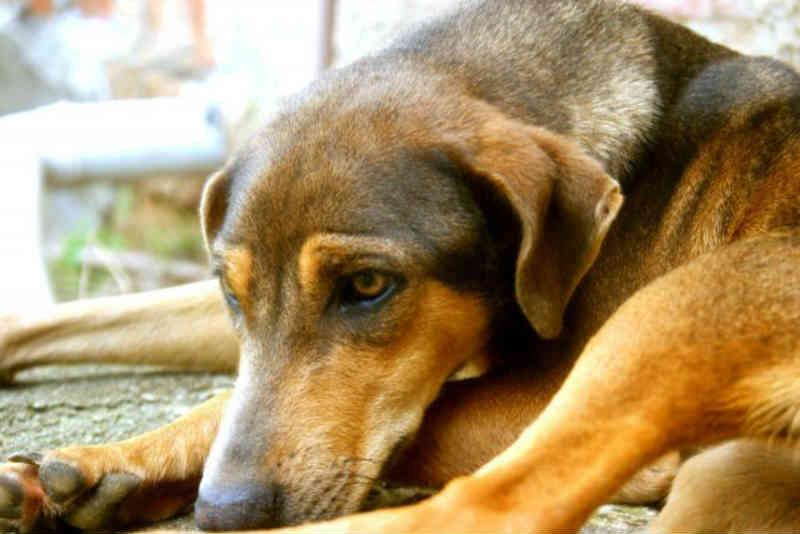 Casos de abandono de animais durante as férias aumentam cerca de 50% em Caruaru, PE