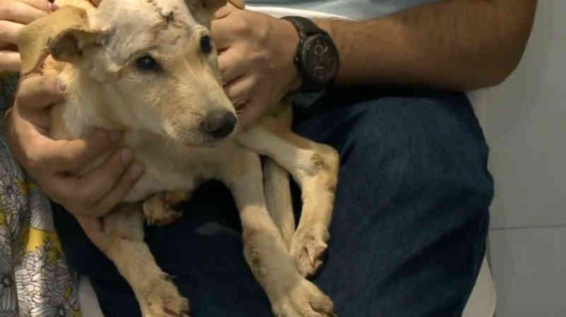 Cirurgia inédita salva cachorro de rua resgatado com cinomose