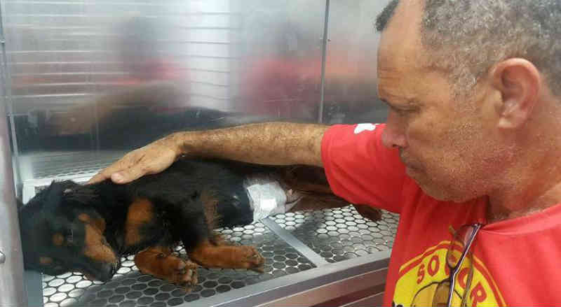 Câmara do Recife aprova criação do Dia do Socorro aos Animais